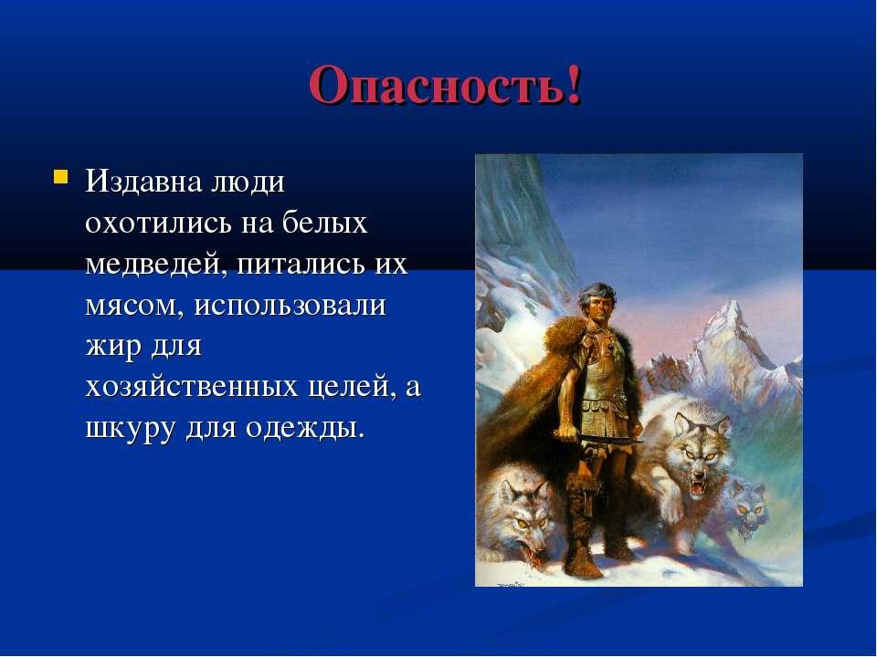 Опасность! Издавна люди охотились на белых медведей, питались их мясом, испол...