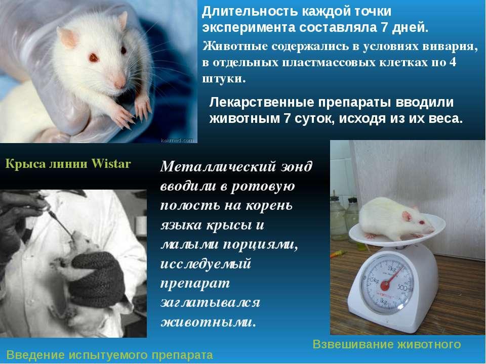 Крыса линии Wistar Введение испытуемого препарата Взвешивание животного Длите...