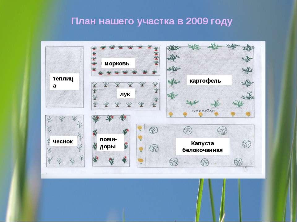 План нашего участка в 2009 году