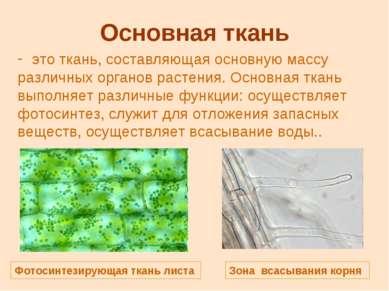 Основная ткань это ткань, составляющая основную массу различных органов расте...