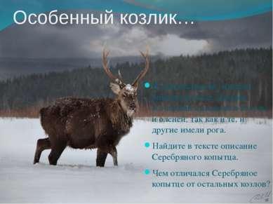 Особенный козлик… В той местности, которая описана в сказе, дикими козликами ...