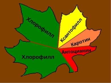 Хлорофилл Хлорофилл Ксантофилл Каротин Антоцианин
