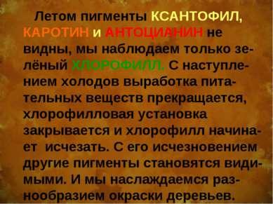 Летом пигменты КСАНТОФИЛ, КАРОТИН и АНТОЦИАНИН не видны, мы наблюдаем только ...