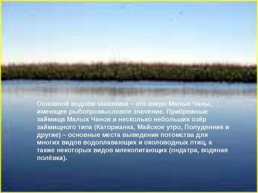 Основной водоём заказника – это озеро Малые Чаны, имеющее рыбопромысловое зна...