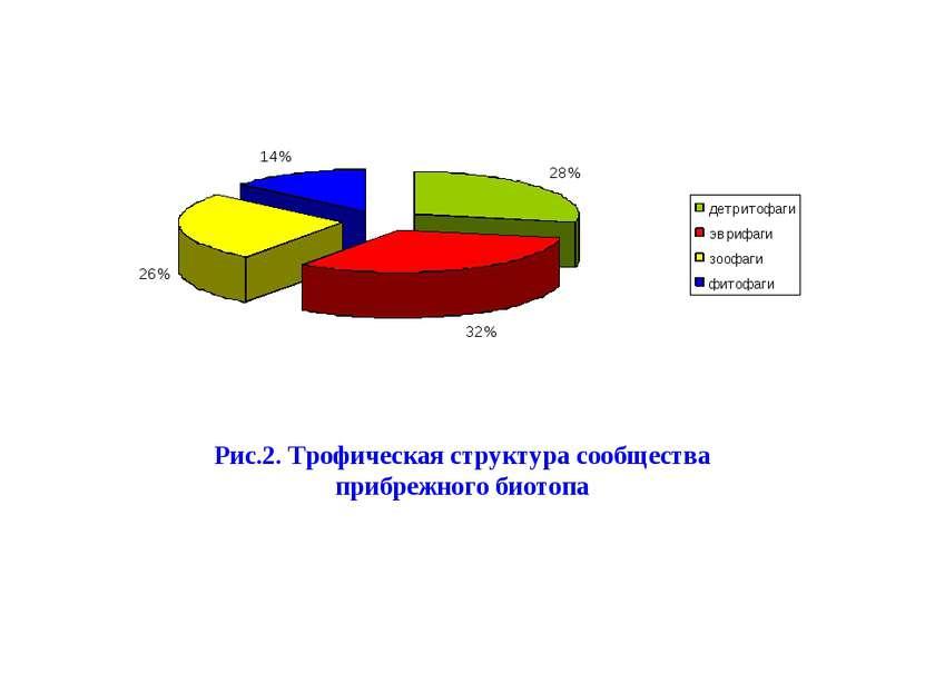 Рис.2. Трофическая структура сообщества прибрежного биотопа