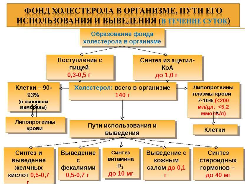 Образование фонда холестерола в организме Поступление с пищей 0,3-0,5 г Синте...