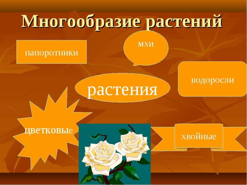 Многообразие растений растения папоротники мхи водоросли цветковые хвойные