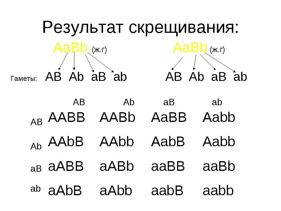 Результат скрещивания: AaBb (ж.г) AaBb (ж.г) Гаметы: AB Ab aB ab AB Ab aB ab ...
