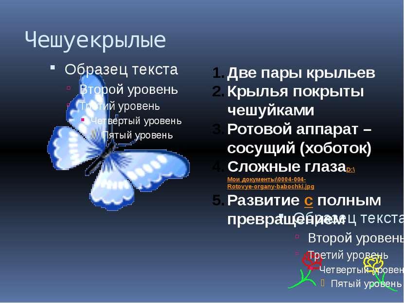 Чешуекрылые Две пары крыльев Крылья покрыты чешуйками Ротовой аппарат – сосущ...