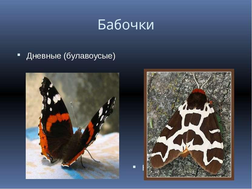 Бабочки Дневные (булавоусые) Ночные (перистоусые)