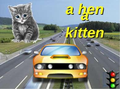 a hen a kitten