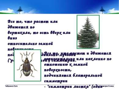 Чабаненко Катя Геометрия 8 класс Все то, что растет или движется по вертикали...