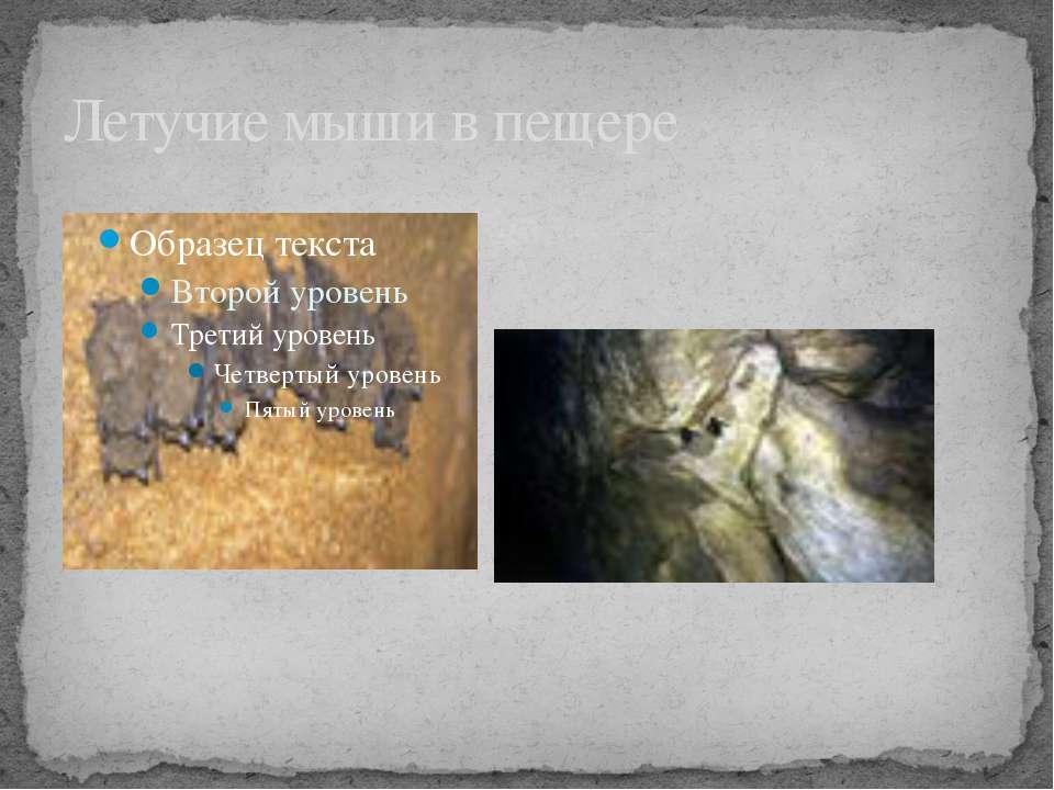 Летучие мыши в пещере