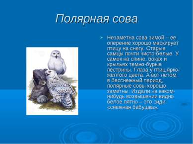 Полярная сова Незаметна сова зимой – ее оперение хорошо маскирует птицу на сн...