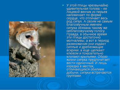 У этой птицы чрезвычайно удивительная голова – ее лицевой венчик из перьев на...