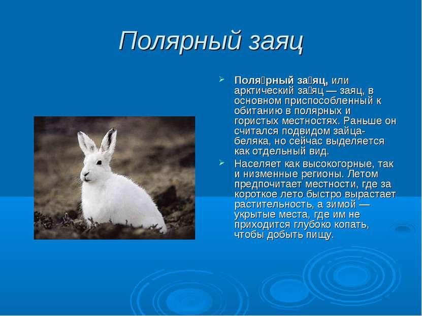 Полярный заяц Поля рный за яц, или арктический за яц — заяц, в основном присп...