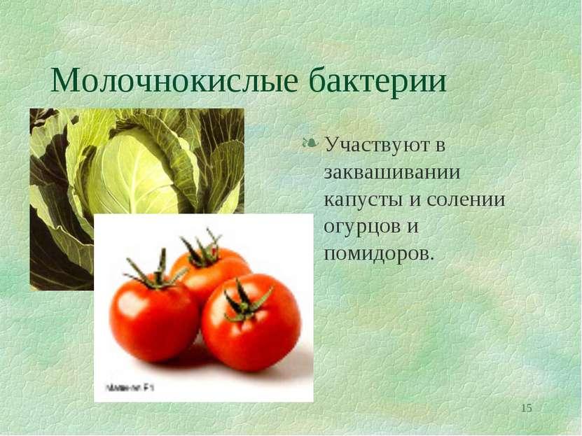 * Молочнокислые бактерии Участвуют в заквашивании капусты и солении огурцов и...