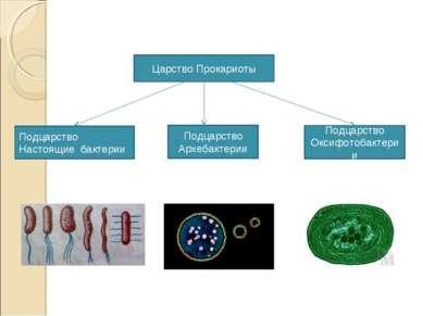 Царство Прокариоты Подцарство Настоящие бактерии Подцарство Архебактерии Подц...