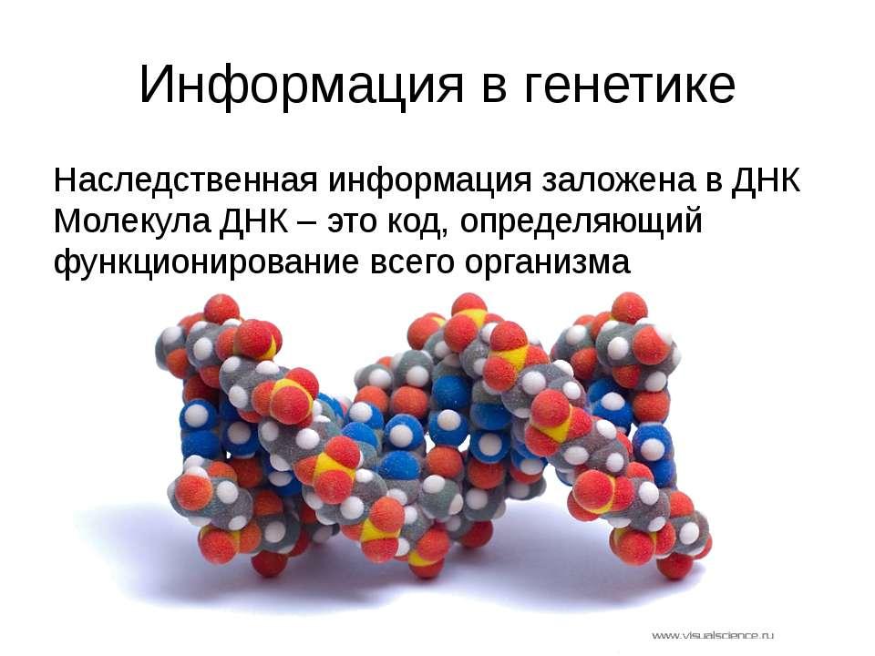 Информация в генетике Наследственная информация заложена в ДНК Молекула ДНК –...
