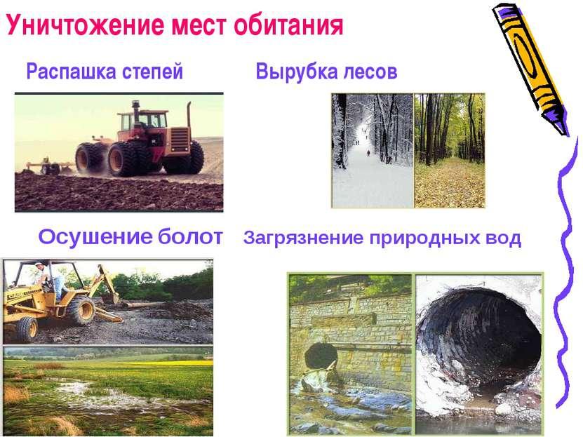 Уничтожение мест обитания Распашка степей Вырубка лесов Осушение болот Загряз...