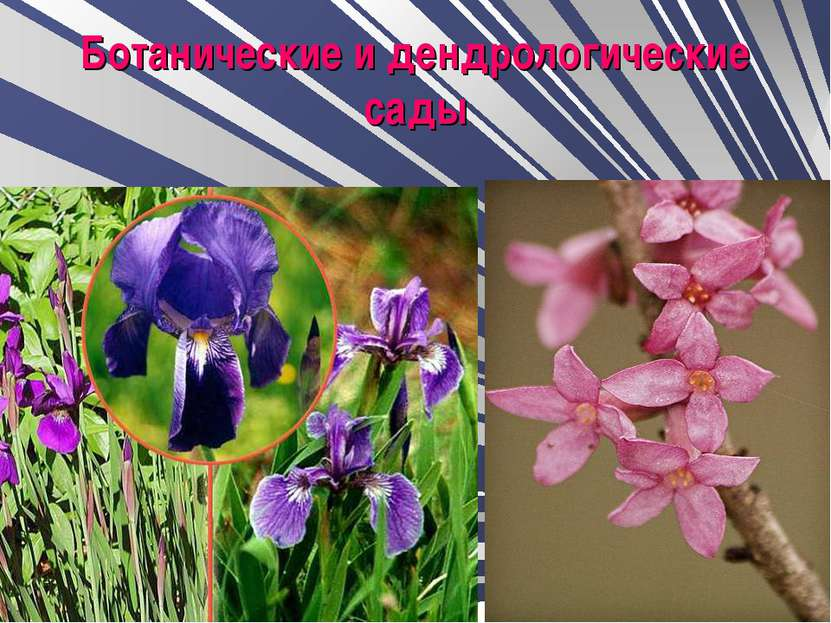Ботанические и дендрологические сады