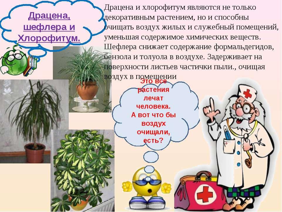 Драцена, шефлера и Хлорофитум. Это все растения лечат человека. А вот что бы ...