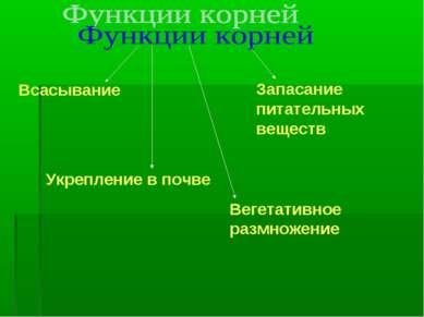 Всасывание Укрепление в почве Вегетативное размножение Запасание питательных ...