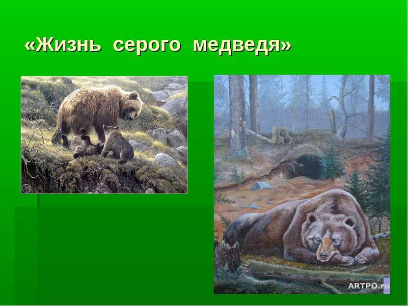 «Жизнь серого медведя»