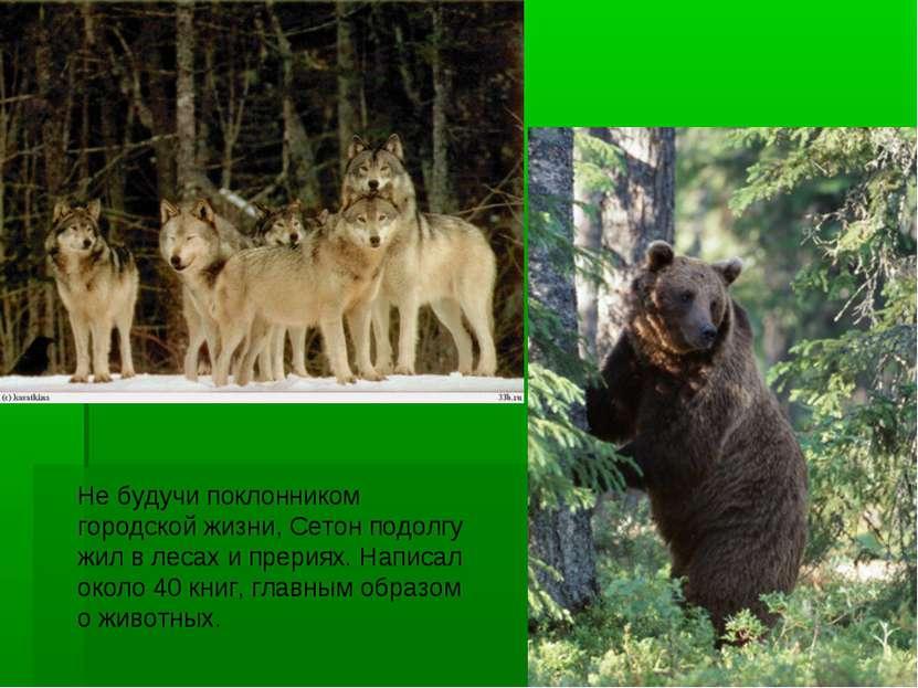 Не будучи поклонником городской жизни, Сетон подолгу жил в лесах и прериях. Н...