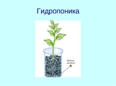 Гидропоника