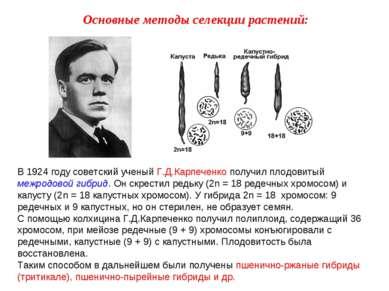 В 1924 году советский ученый Г.Д.Карпеченко получил плодовитый межродовой гиб...