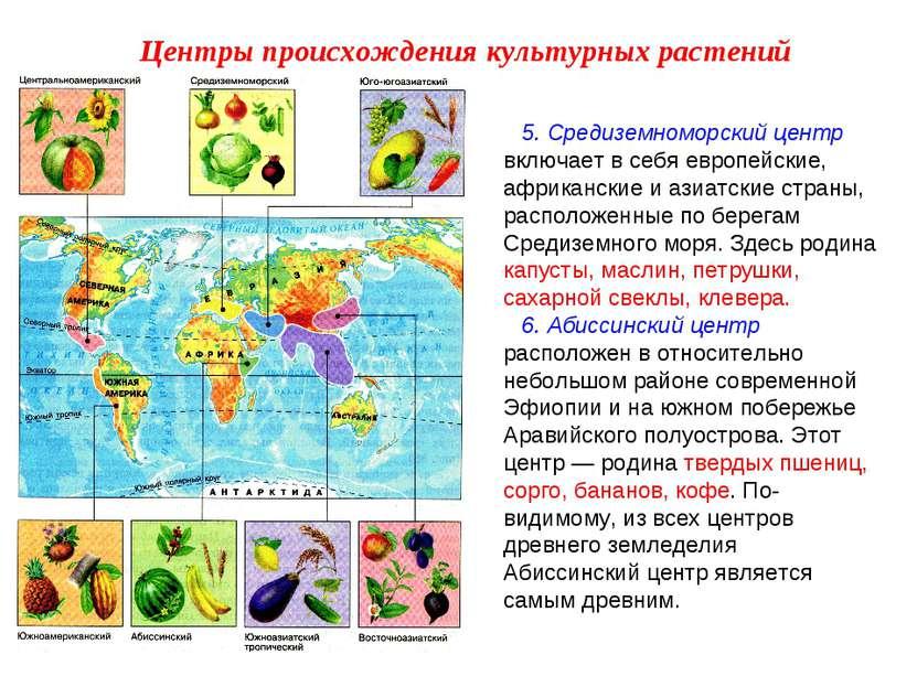 5. Средиземноморский центр включает в себя европейские, африканские и азиатск...