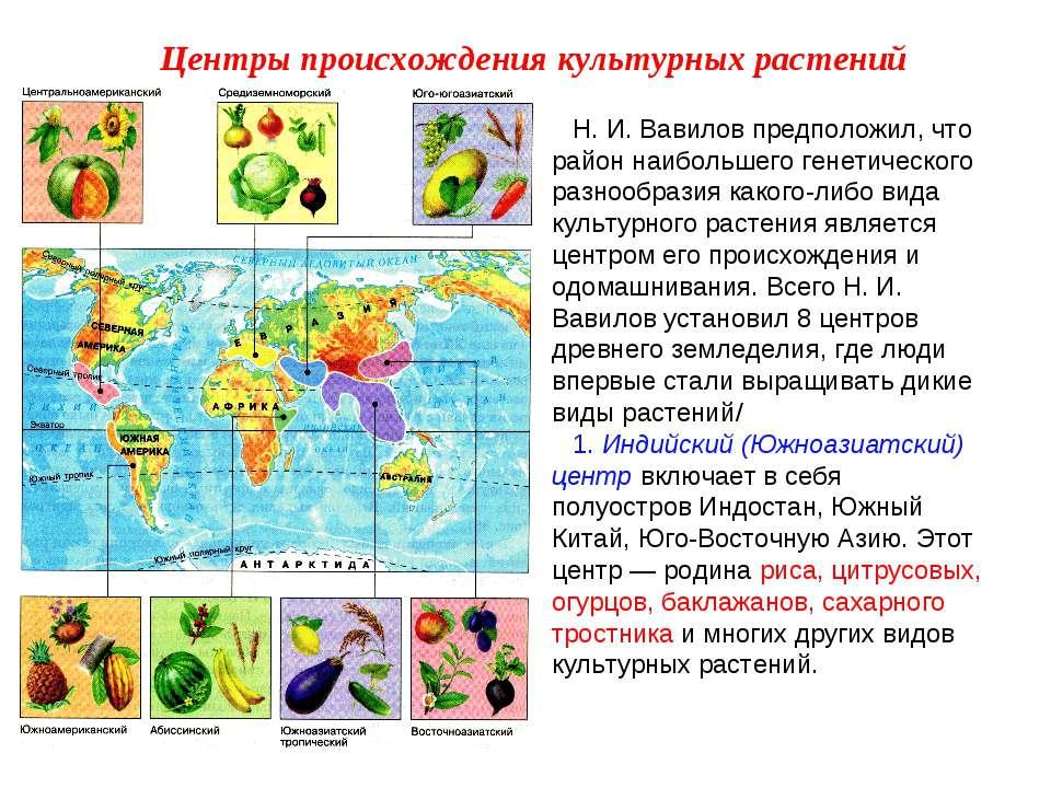 Н. И. Вавилов предположил, что район наибольшего генетического разнообразия к...