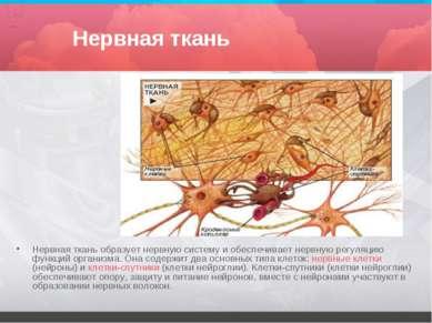 Нервная ткань Нервная ткань образует нервную систему и обеспечивает нервную р...