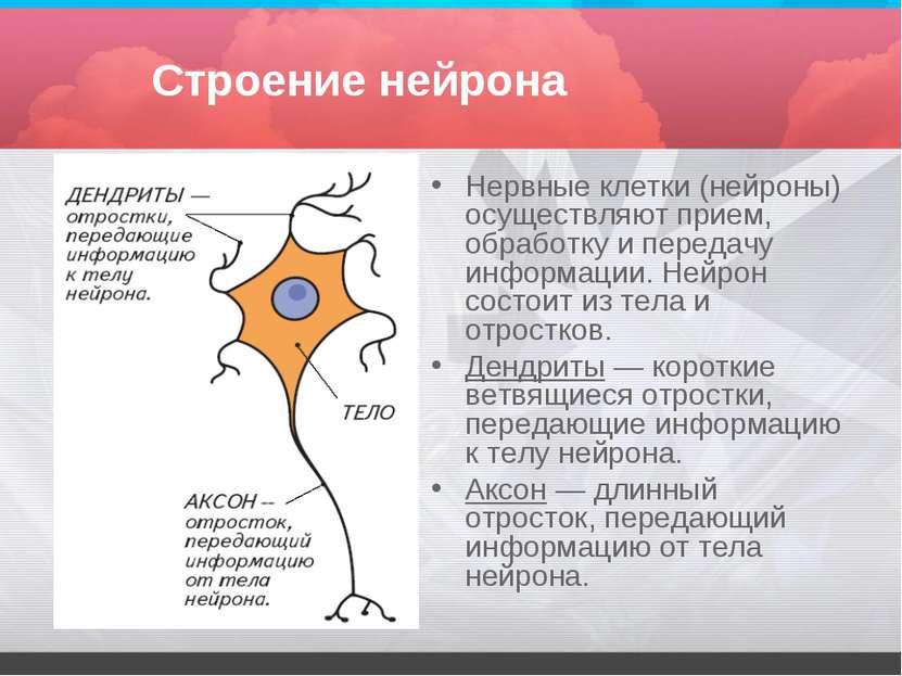 Строение нейрона Нервные клетки (нейроны) осуществляют прием, обработку и пер...