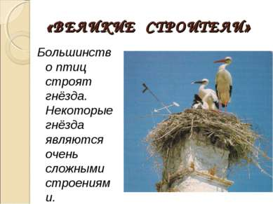 «ВЕЛИКИЕ СТРОИТЕЛИ» Большинство птиц строят гнёзда. Некоторые гнёзда являются...