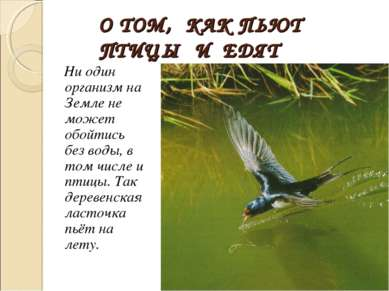 О ТОМ, КАК ПЬЮТ ПТИЦЫ И ЕДЯТ Ни один организм на Земле не может обойтись без ...