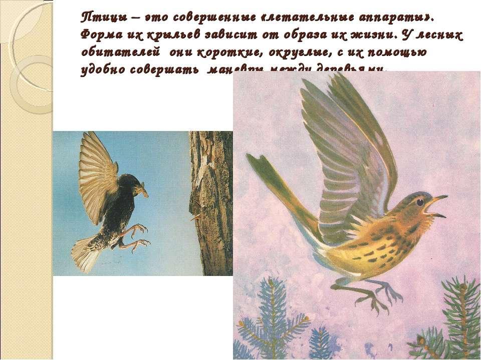 Птицы – это совершенные «летательные аппараты». Форма их крыльев зависит от о...