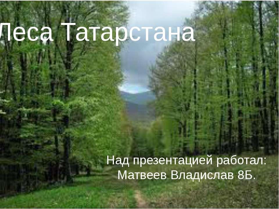 Леса Татарстана Над презентацией работал: Матвеев Владислав 8Б.