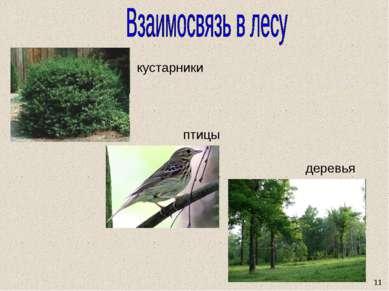 11 кустарники птицы деревья