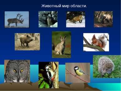 Животный мир области.