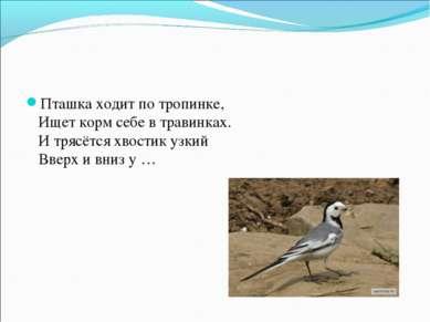 Пташка ходит по тропинке, Ищет корм себе в травинках. И трясётся хвостик уз...