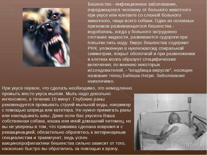 Бешенство - инфекционное заболевание, передающееся человеку от больного живот...