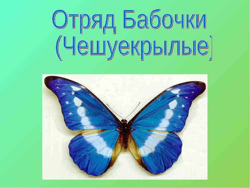 Скачать презентации по биологии на тему бабочки