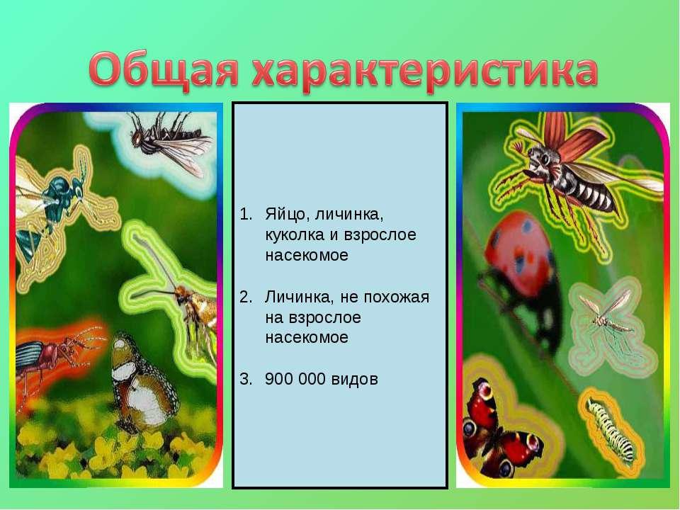 Яйцо, личинка, куколка и взрослое насекомое Личинка, не похожая на взрослое н...