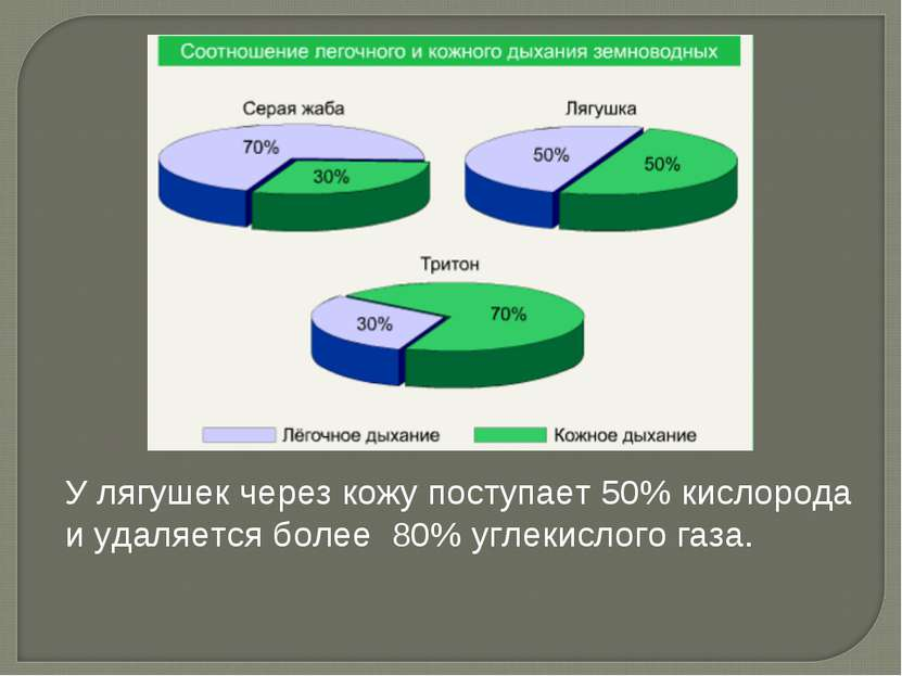 У лягушек через кожу поступает 50% кислорода и удаляется более 80% углекислог...