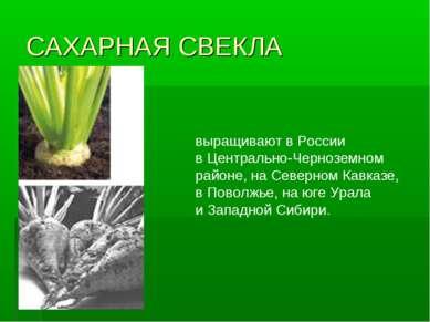 САХАРНАЯ СВЕКЛА выращивают вРоссии вЦентрально-Черноземном районе, наСевер...