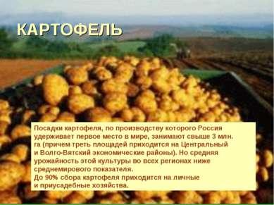 КАРТОФЕЛЬ Посадки картофеля, попроизводству которого Россия удерживает перво...