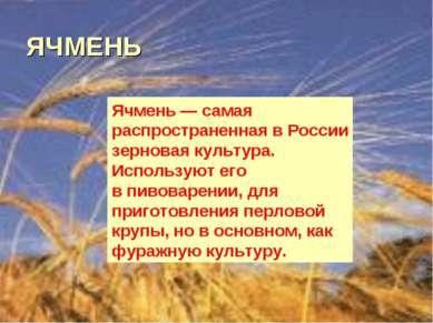 ЯЧМЕНЬ Ячмень— самая распространенная вРоссии зерновая культура. Используют...