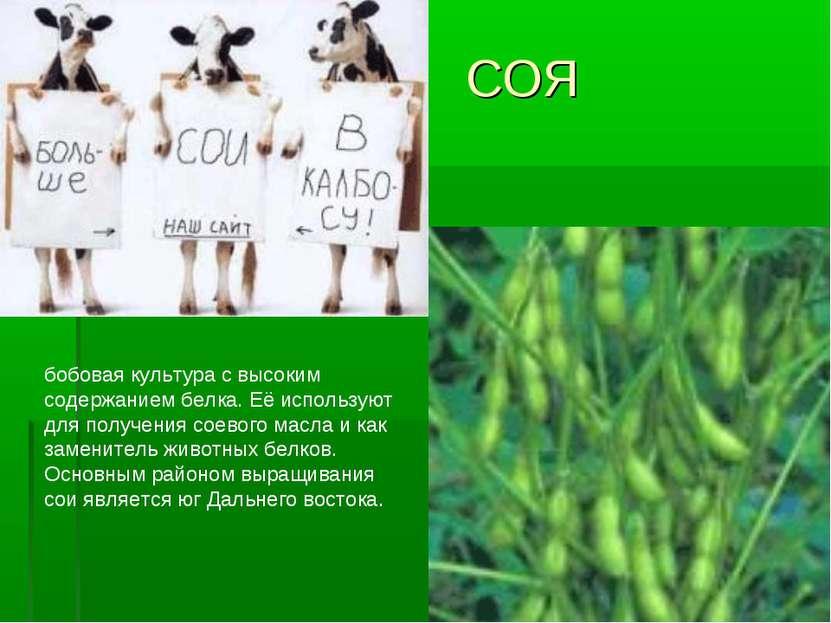 СОЯ бобовая культура свысоким содержанием белка. Еёиспользуют для получения...